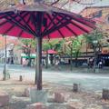 祇園の写真_202552