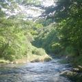 ゆうすい自然の森(旧 遊水峡キャンプ場)の写真_202637