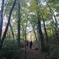 清流の森の写真_202684