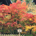 永観堂(禅林寺)の写真_203771