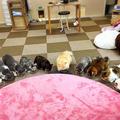 Cat Cafe ねころびの写真_207602