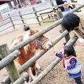 らくのうマザーズ阿蘇ミルク牧場の写真_212081
