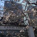 CANAL CAFE (カナルカフェ)の写真_226920
