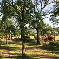 豊洲公園の写真_235437