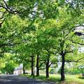 大井ふ頭海浜公園の写真_236018