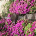 祇園山 安養院の写真_236208