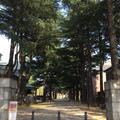 あがたの森公園の写真_236312