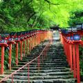 貴船神社の写真_238002