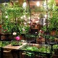 青山フラワーマーケット ティーハウス 南青山本店 (Aoyama Flower Market TEA HOUSE)の写真_239200