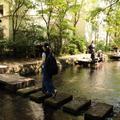 源兵衛川親水公園の写真_248637
