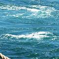 鳴門渦潮の写真_257672