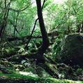 屋久島自然休養林(ヤクスギランド)の写真_258418