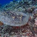 嘉比島の写真_266820
