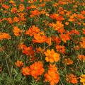 山中湖花の都公園の写真_269005