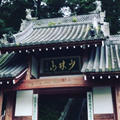 少林山達磨寺の写真_277723