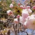 新宿御苑の写真_308847