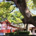 佐賀県護国神社の写真_310465