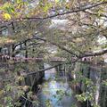 目黒川の写真_312262