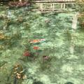 モネの池の写真_326996