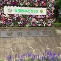 世田谷公園の写真_339623