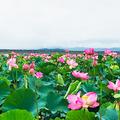長沼の写真_408727