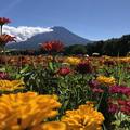 山中湖花の都公園の写真_412289