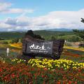 ぜるぶの丘の写真_412942