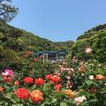 鎌倉文学館の写真_431378