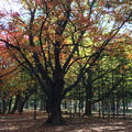 円山公園の写真_449357