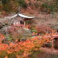 醍醐寺の写真_453503