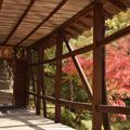高台寺の写真_453507