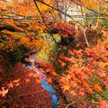 帝釈峡の写真_460481