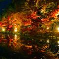 神勝禅寺 紅葉ライトアップ特別拝観の写真_460494