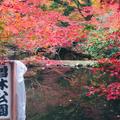 曽木公園の写真_463011