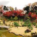 玉泉院丸庭園の写真_465576