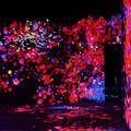 デジタルアート ミュージアム(MORI Building Digital Art Museum: EPSON teamLab Borderless)の写真_472608