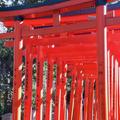 乙女稲荷神社の写真_480593
