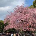 上野恩賜公園の写真_531881