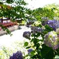 矢田寺の写真_582478