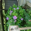 東慶寺の写真_586048