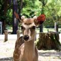 奈良公園の写真_622613
