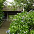 東慶寺の写真_658066