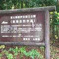 青木ヶ原樹海の写真_672095