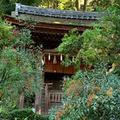宇治上神社の写真_674946