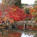 永観堂(禅林寺)の写真_690157