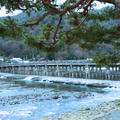 渡月橋の写真_705470