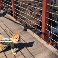 城ヶ崎海岸の写真_758518