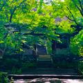 常寂光寺の写真_771188