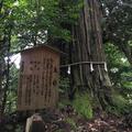 須佐神社の写真_783880