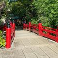 氷川神社の写真_791844